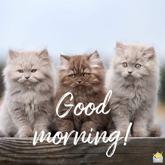картинка доброго ранку кошенята