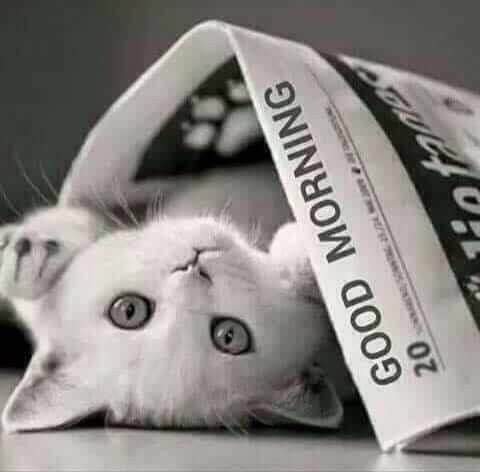 картинка доброе утро с котом