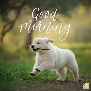 картинка доброго ранку песик
