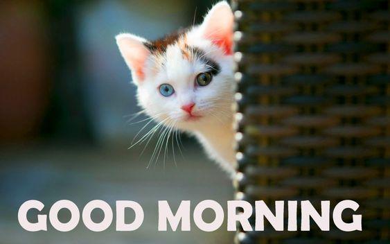 картинка доброго ранку котик