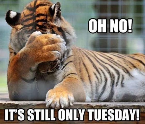 картинка доброе утро вторник тигр