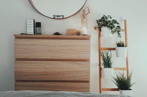 Кімнатні рослини для інтер'єру