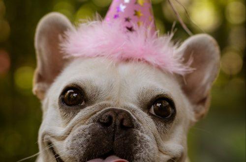 с днем рождения собака