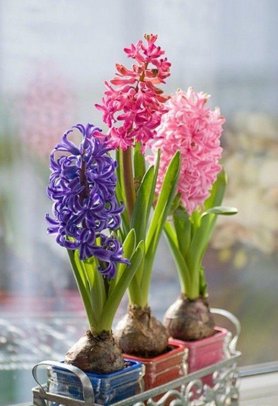 Як отримати квіти в потрібний час