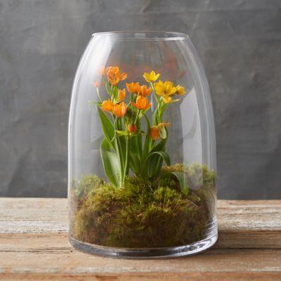 тераріум з квітами