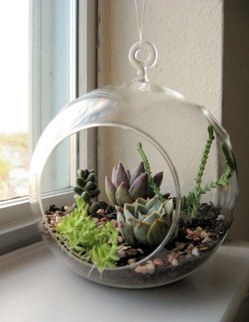 тераріум з рослинами