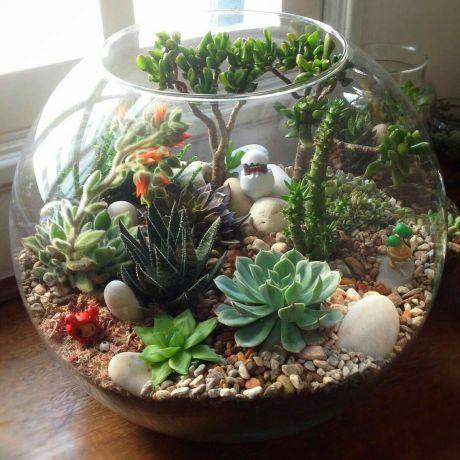 тераріум з рослинами 1