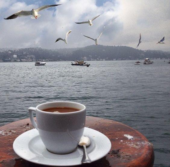 кофе чайки фото