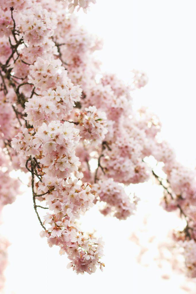 гарні квіти фото