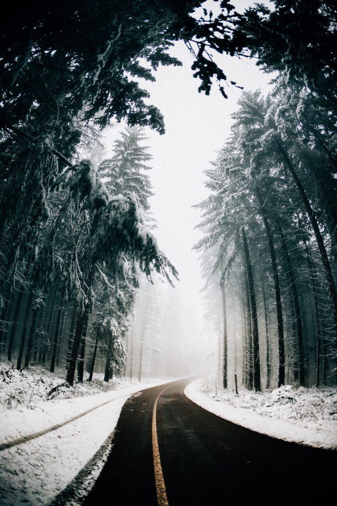 фото зима ліс