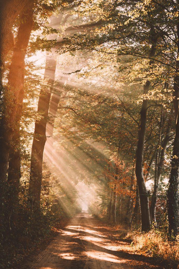 фото ліс в сонячних променях
