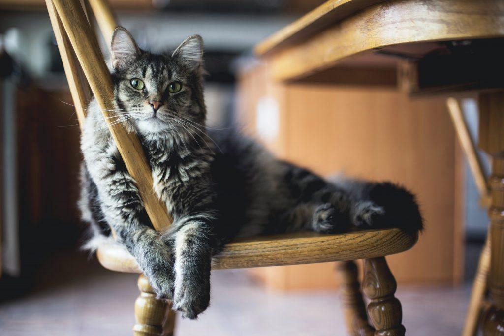 Жартуй про котиків