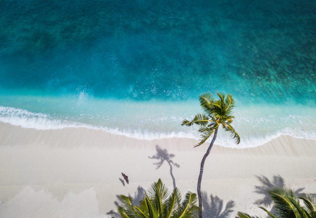 картинка пальми і океан