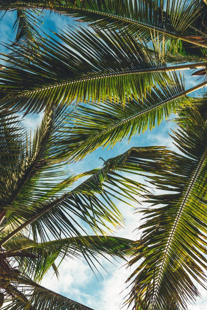 фото пальми