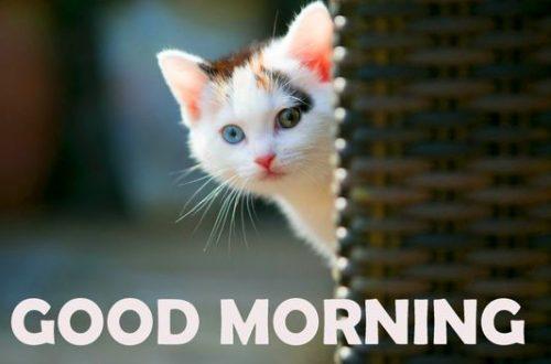 Добрий ранок картинки