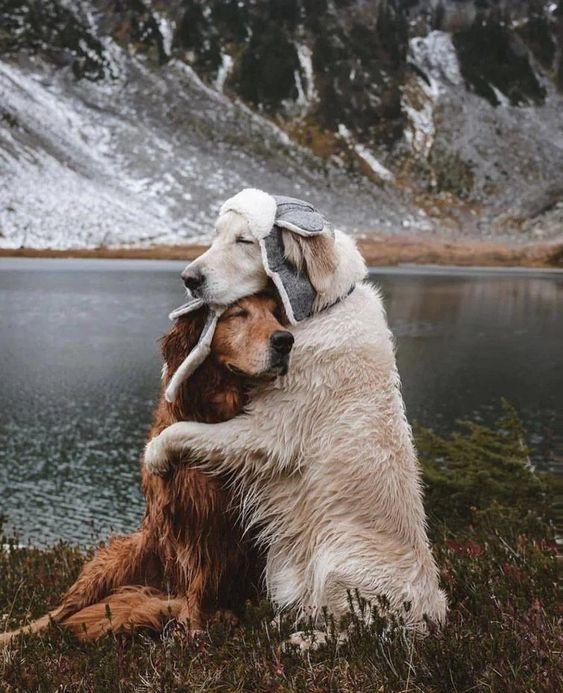 милі картинки з тваринами