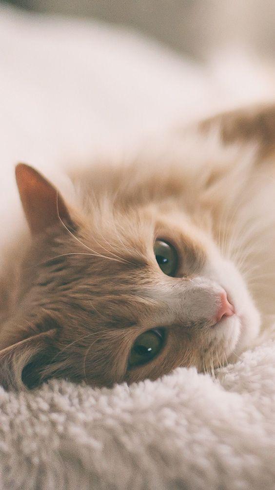 красиве фото з котиком