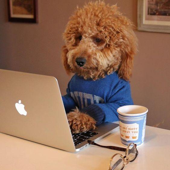 собака миле фото