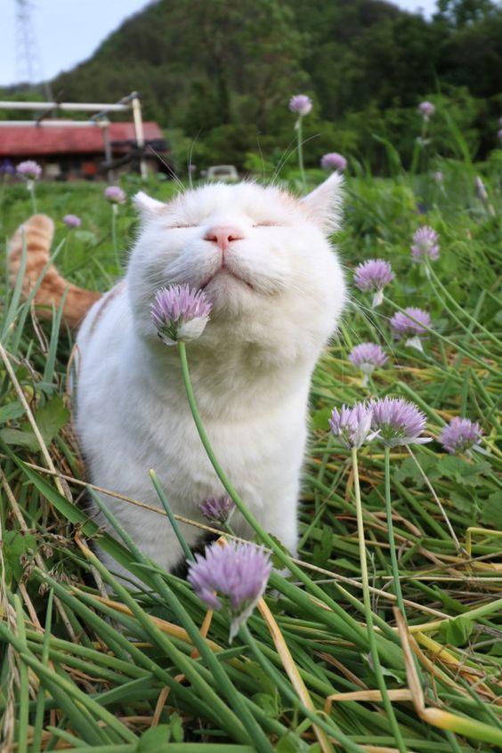 милий котик
