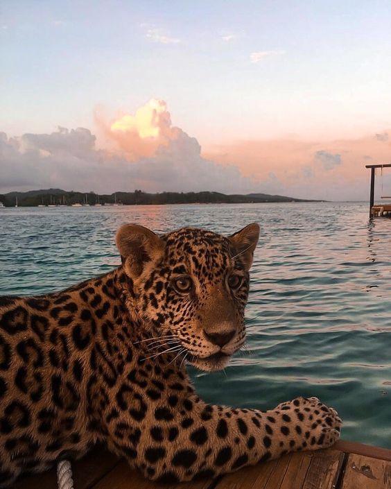 красиві шпалери з тваринами