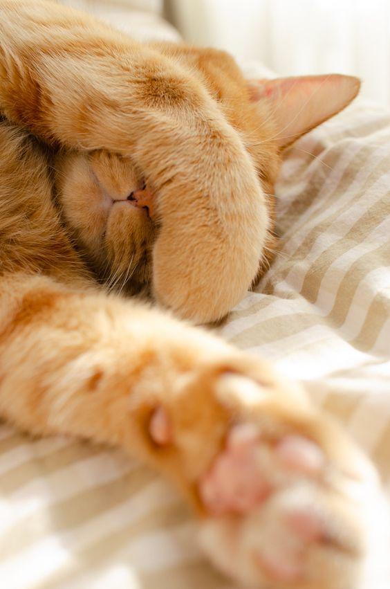 котячі лапки фото