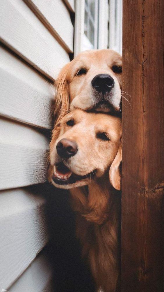 милі фото з собаками