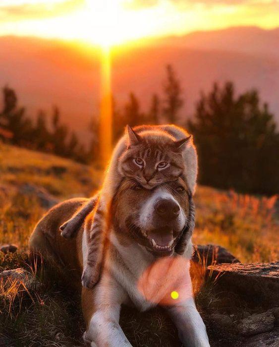 шпалери з тваринами кіт і собака