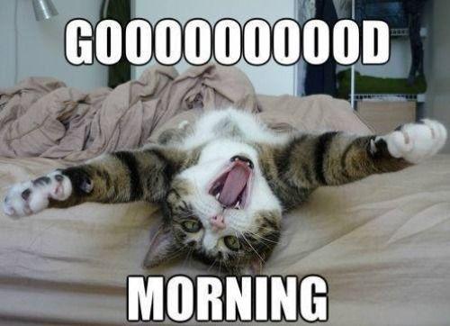 картинки good morning котик