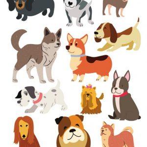 Найрозумніші породи собак