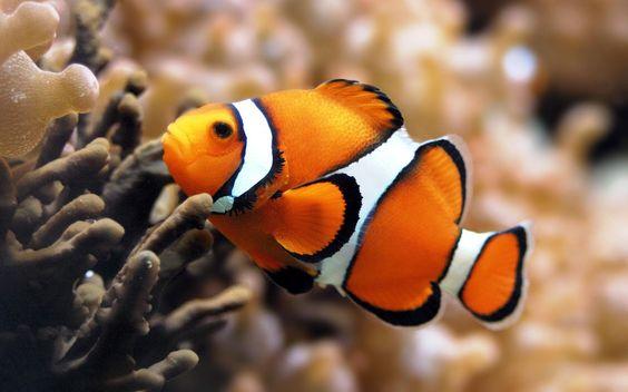 цікаві факти про риб