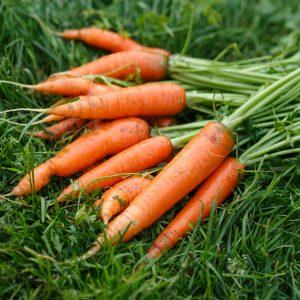 Особенности выращивания моркови из семян