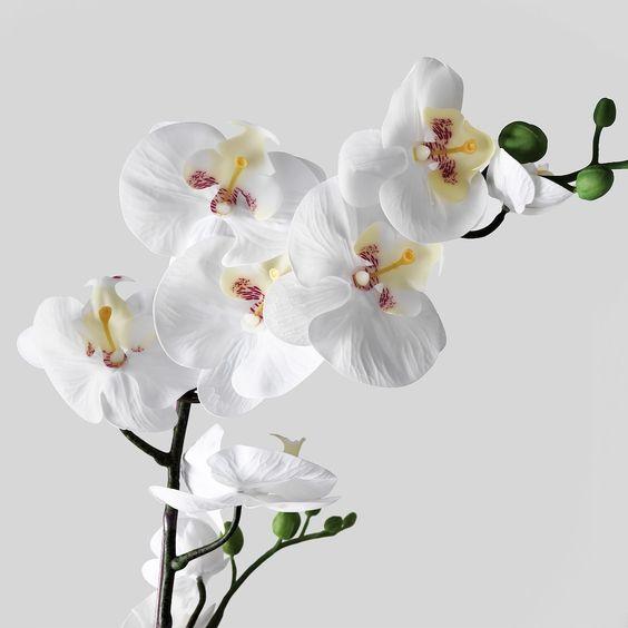 Цветущие гибискусы и прекрасные орхидеи - Украфлора